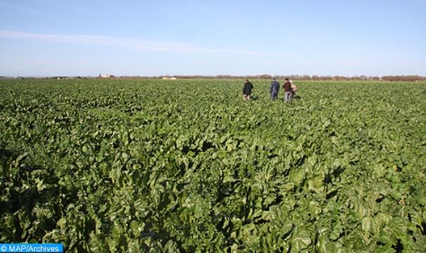 Bonnes perspectives pour la campagne agricole dans l'Oriental