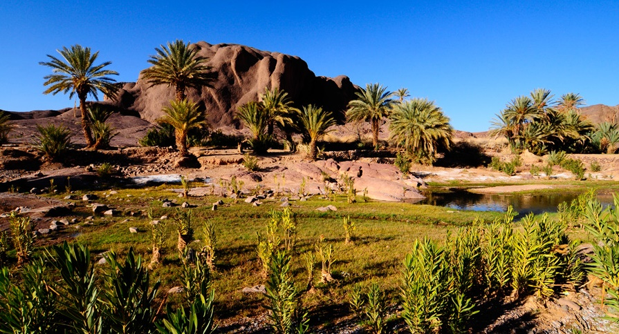 Zagora à l'heure du Forum international des oasis