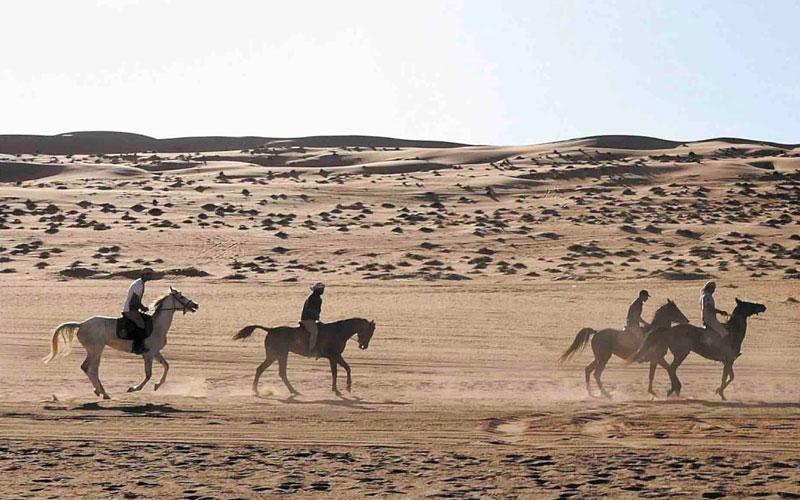 """La première édition des """"Gallops of Morocco"""" dans la région de Drâa-Tafilalet"""