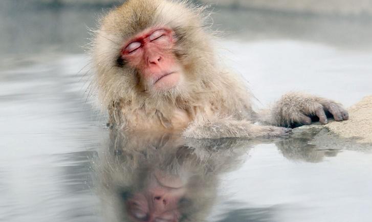 Les singes aussi tirent des bienfaits des sources d'eau chaude