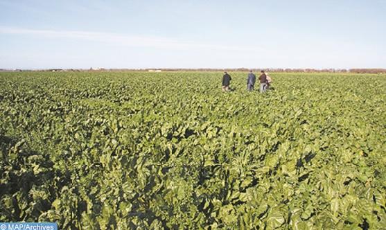 ONCA, FOLEA et AGROPOL s'engagent à développer la filière des cultures oléagineuses