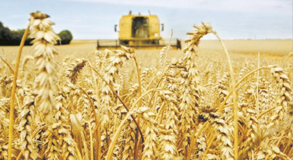 Les droits de douane sur l'importation du blé tendre montent au firmament