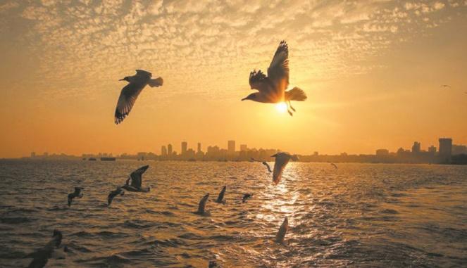 Les oiseaux migrateurs champions de l'optimisation