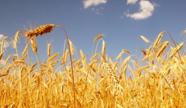 Echange marocco-allemand sur les marchés et technologies de céréales