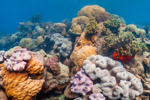1% seulement du plus grand récif  japonais reste sain