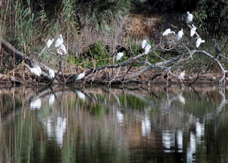 Les zones humides, un patrimoine universel en danger