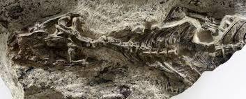 Indentification d'un vieil ancêtre aux lézards et aux serpents