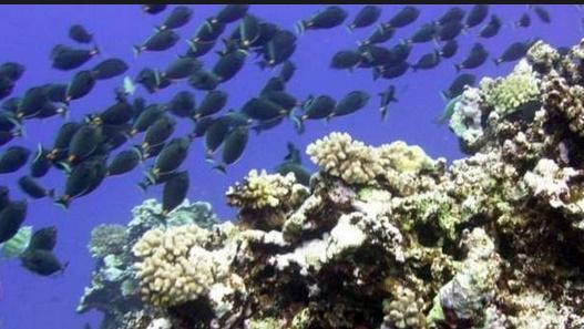 Les effets du vacarme sous-marin créé par l'homme