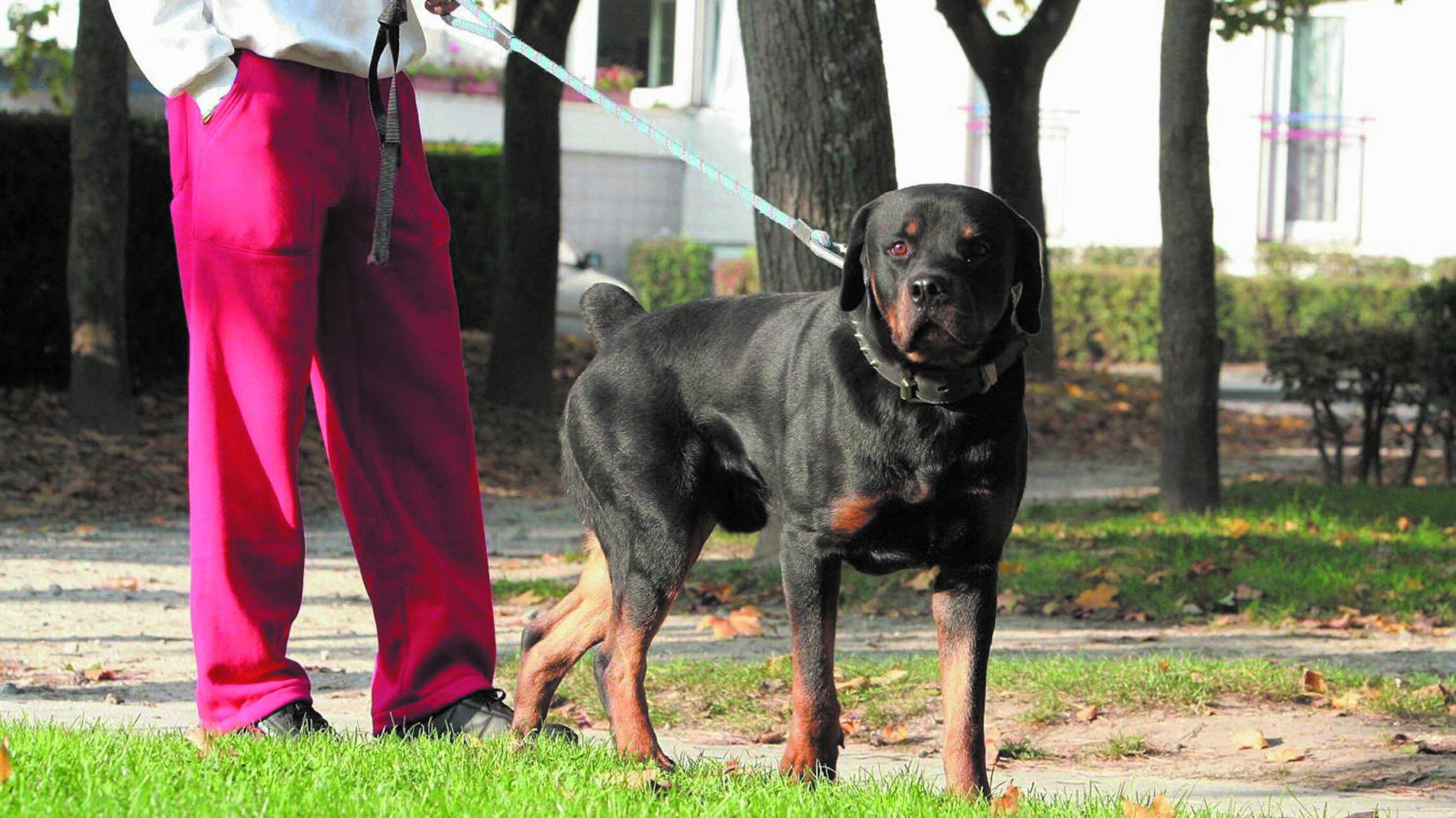 Certaines races canines trop dangereuses pour servir d'animaux de compagnie