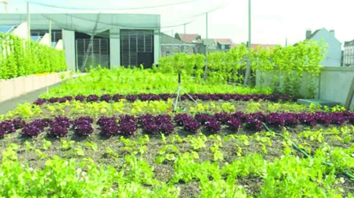 En plein essor à Bruxelles, l'agriculture urbaine cherche son modèle