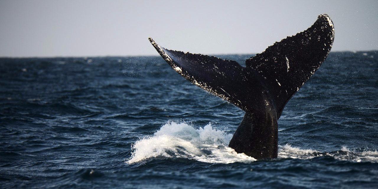 Les Romains pourraient avoir chassé la baleine en Méditerranée
