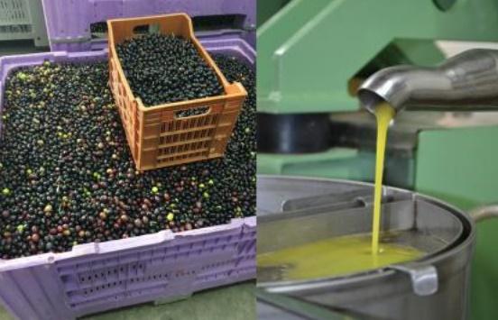 Journée d'étude à Marrakech sur les contraintes et les perspectives du secteur oléicole et de l'huile d'olive