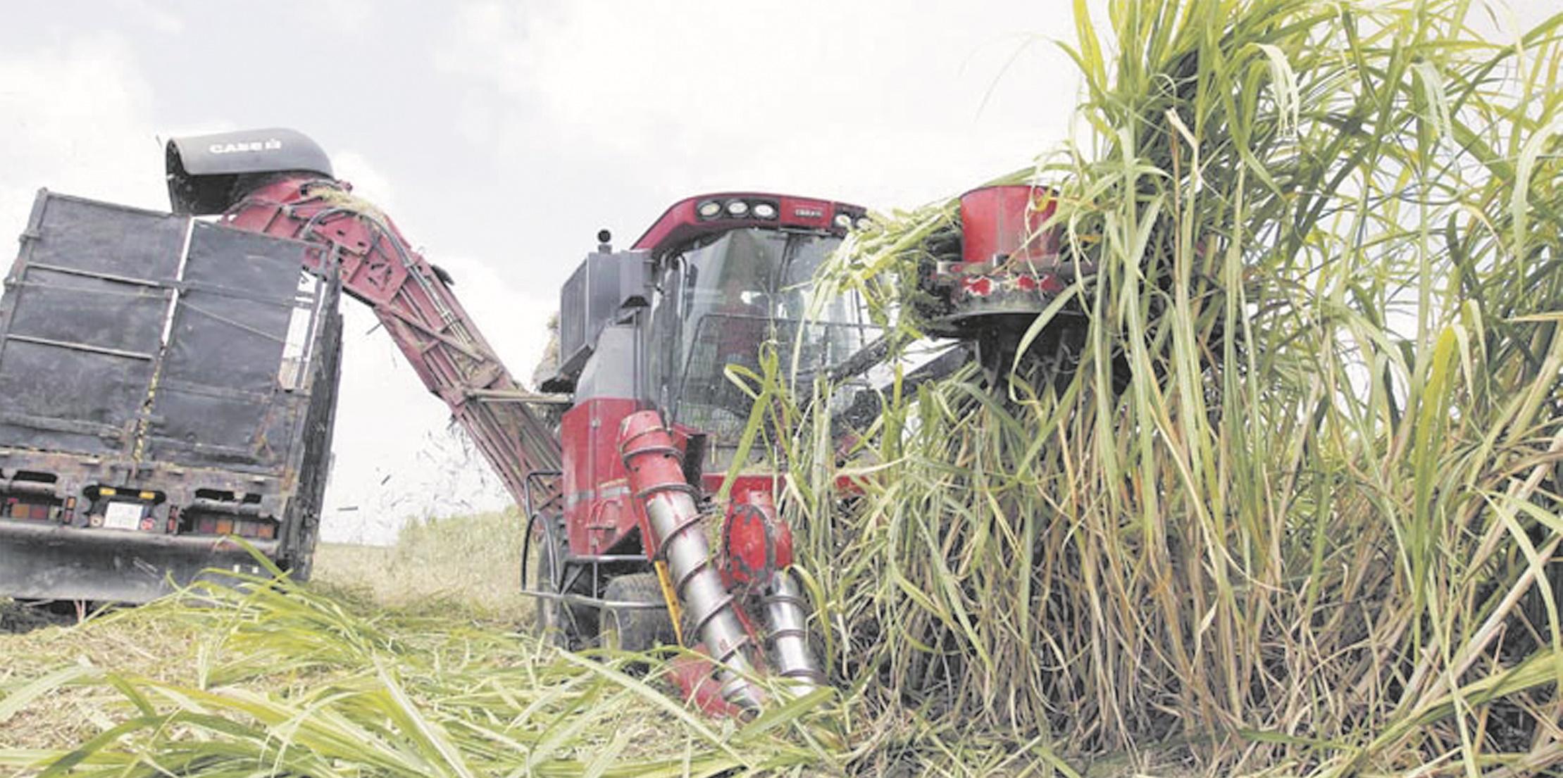 Production record de 1,2 million de tonnes de cultures sucrières dans le Gharb