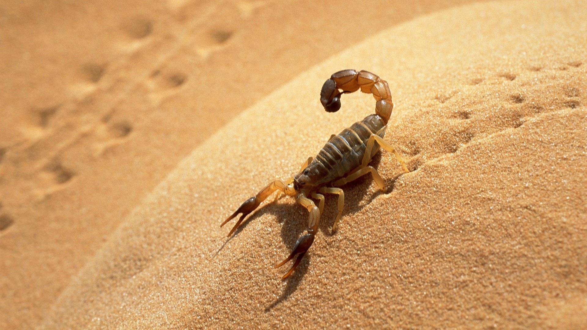 Plan d'action contre les piqûres  de scorpion et morsures de serpent