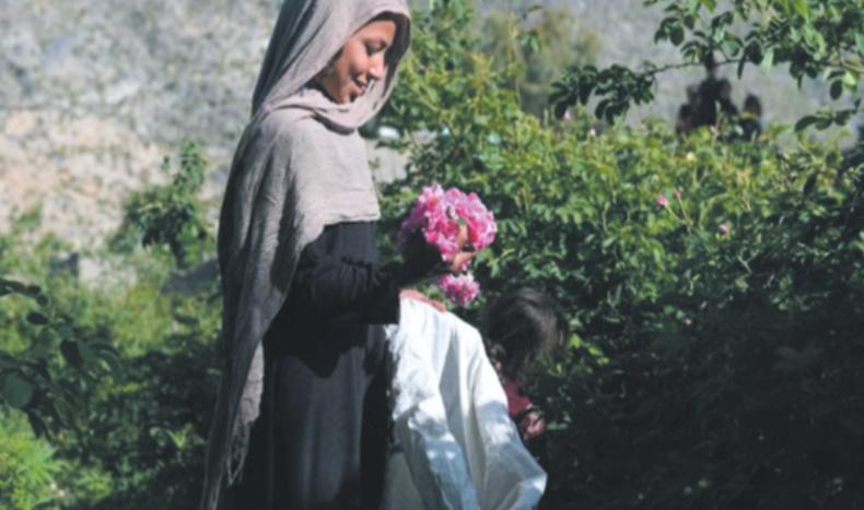Guns & Roses : Un parfum de succès dans l'est de l'Afghanistan