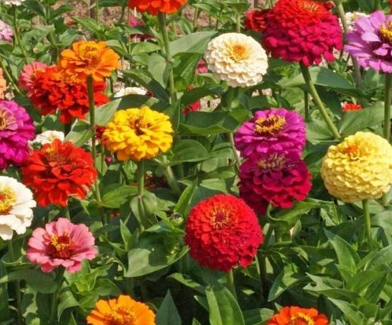 L'été, des fleurs disparaissent, d'autres s'épanouissent !
