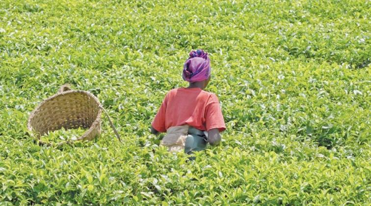 Subventions à l'agriculture africaine  : Une fausse bonne idée !