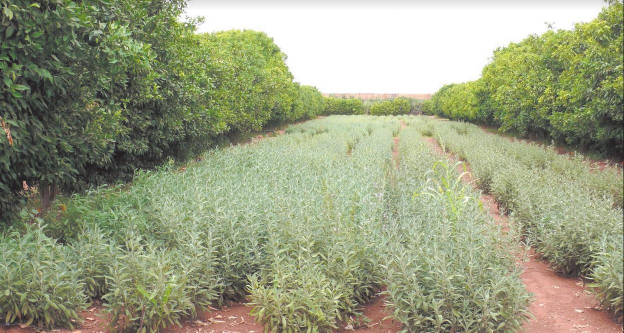 Les mille et un atouts des plantes aromatiques et médicinales