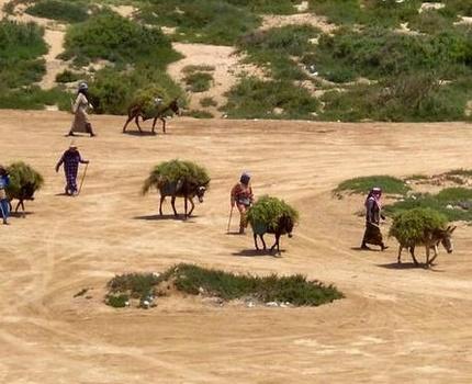 De la farine subventionnée périmée destinée aux ruraux d'Essaouira