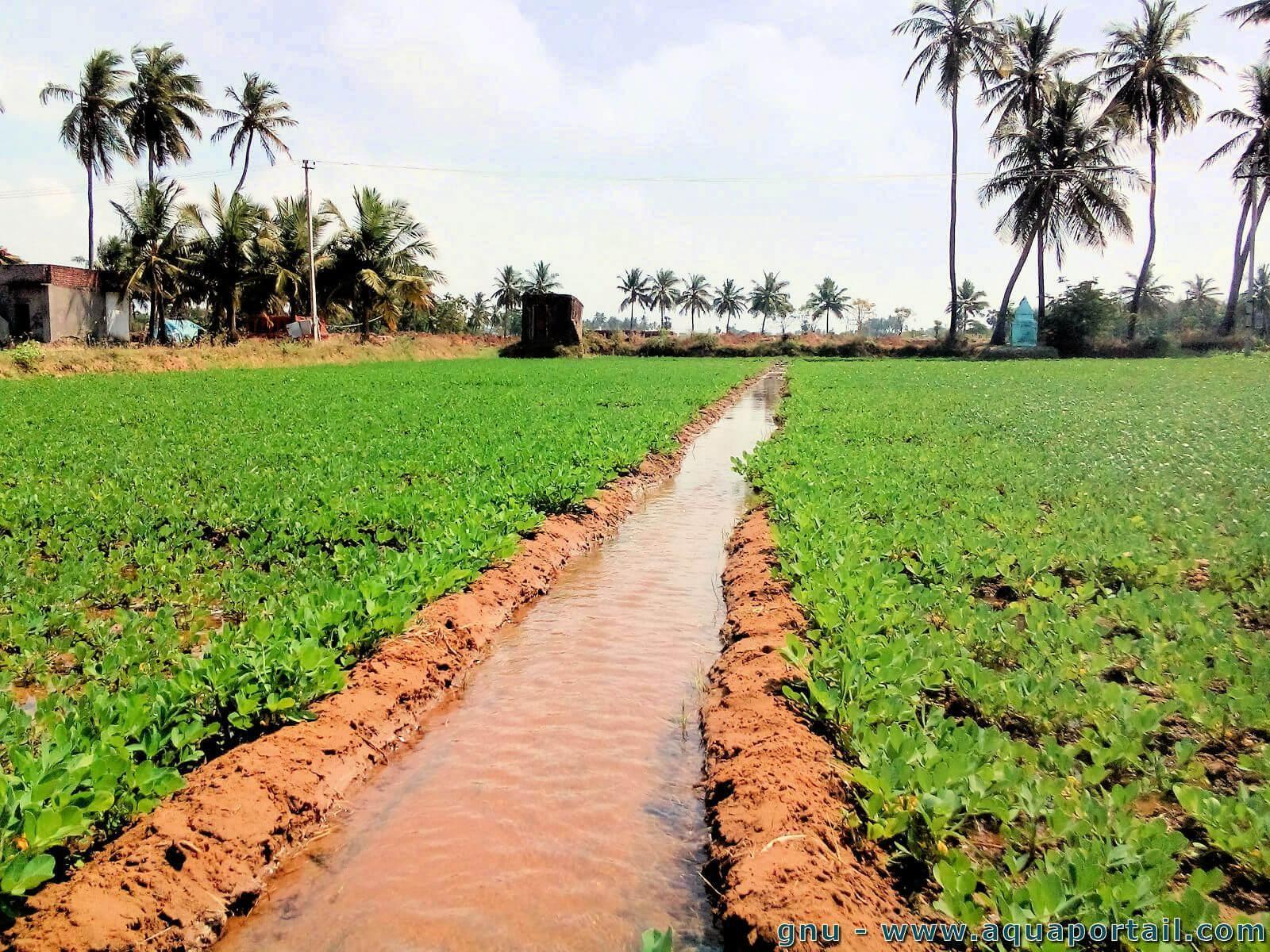 L'expansion des superficies irriguées stimulerait la productivité agricole en Afrique