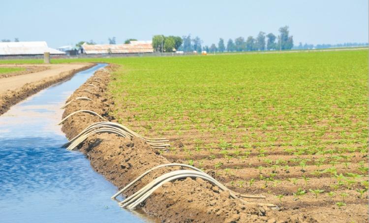 Plan agricole régional de l'Oriental : 7,7 MMDH investis entre 2008 et 2018