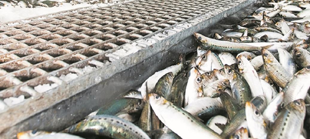 Les performances du secteur halieutique demeurent insuffisantes