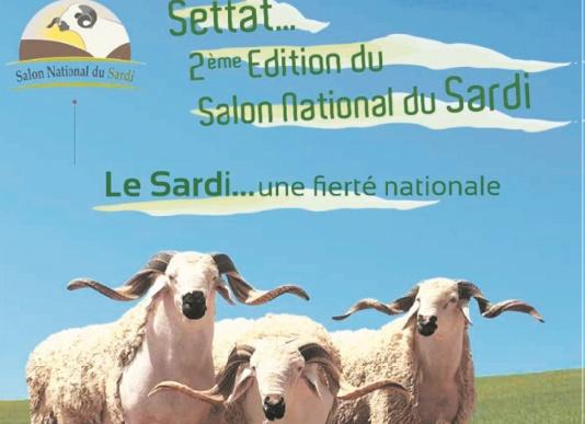Le Salon national de la race Sardi ouvre ses portes à Settat