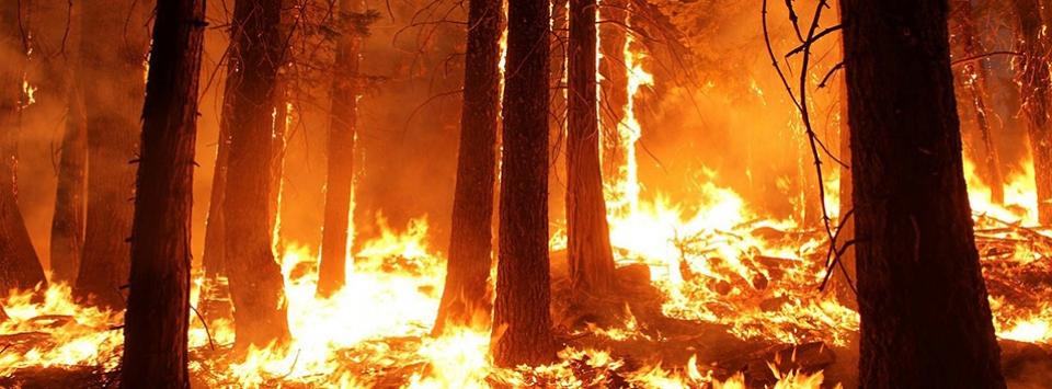 Quelques conseils pour éviter  le déclenchement des feux de forêt