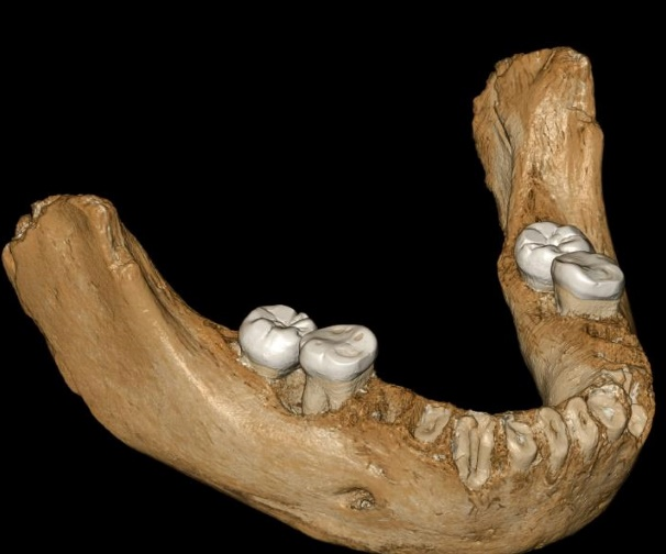 L'homme de Denisova a réussi à vivre sur le plateau tibétain il y a 160.000 ans