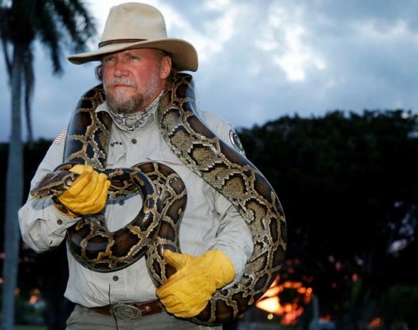 Ces patrouilles qui traquent les pythons la nuit en Floride