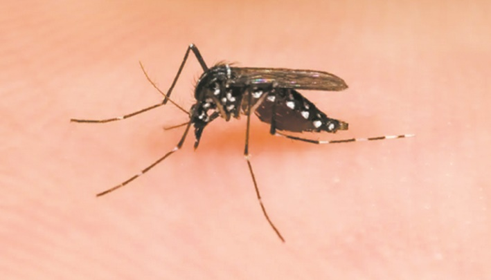 Comment dissuader les moustiques de nous piquer