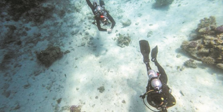 Dans les eaux bleues de la mer Rouge : Le regain du tourisme menace les coraux