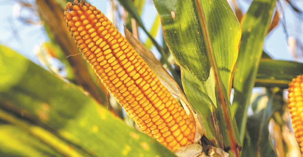 Les prix mondiaux des produits alimentaires en hausse pour le cinquième mois d'affilée