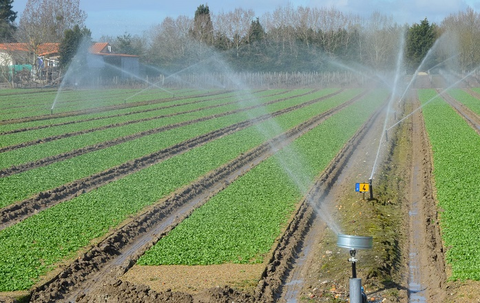 Les subventions accordées aux agriculteurs du Gharb en 2018 ont atteint 135 MDH