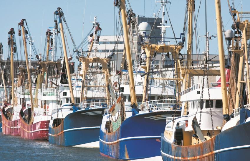 Bonne tenue de l'activité du secteur de la pêche