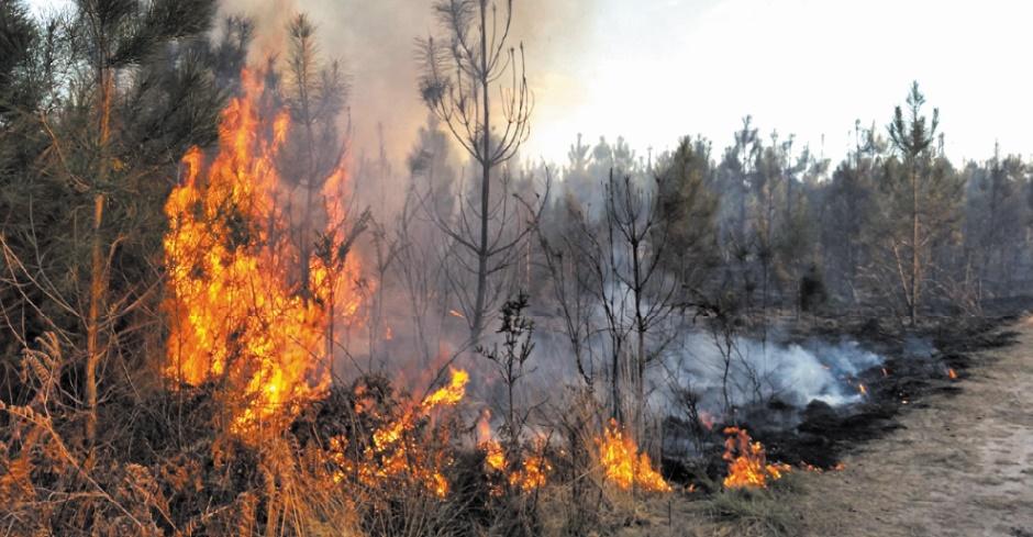 Comment éviter le déclenchement des feux de forêt et s'en sortir indemne