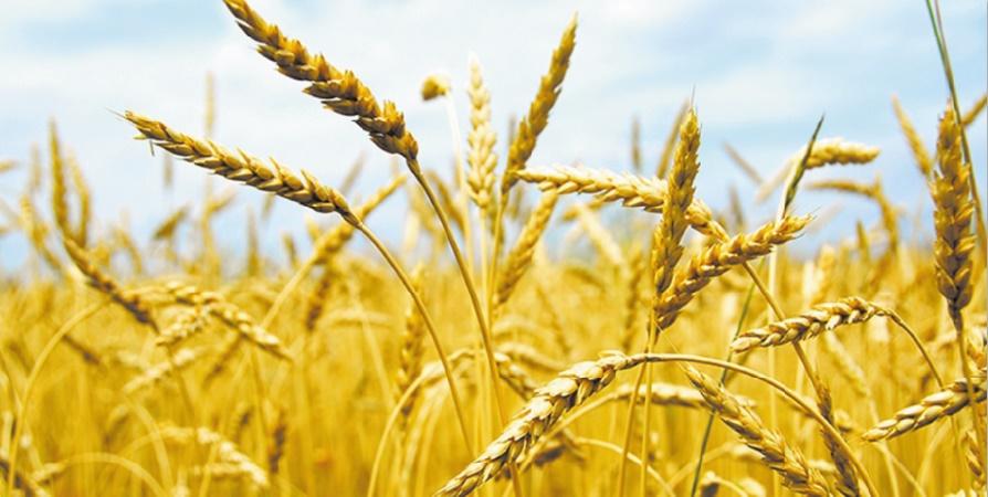 La production céréalière accuse une baisse significative