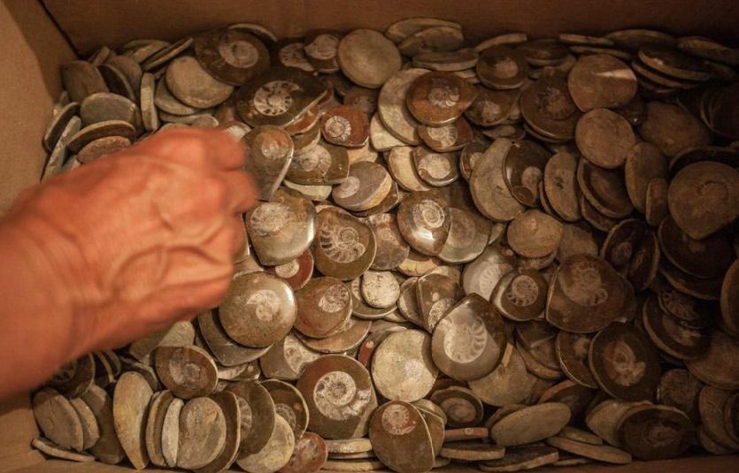 Le discret mais lucratif trafic de fossiles à Erfoud