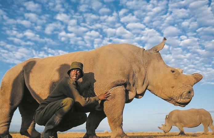 Les scientifiques font un pas de plus pour sauver le rhinocéros blanc du Nord
