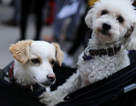 En Norvège, des chiens frappés d'une mystérieuse maladie parfois mortelle