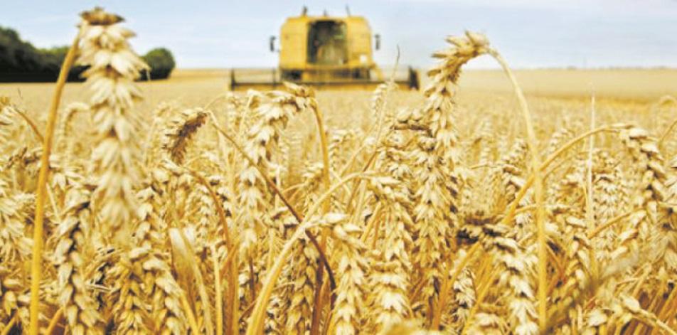 L'offre mondiale de céréales plus abondante que prévu