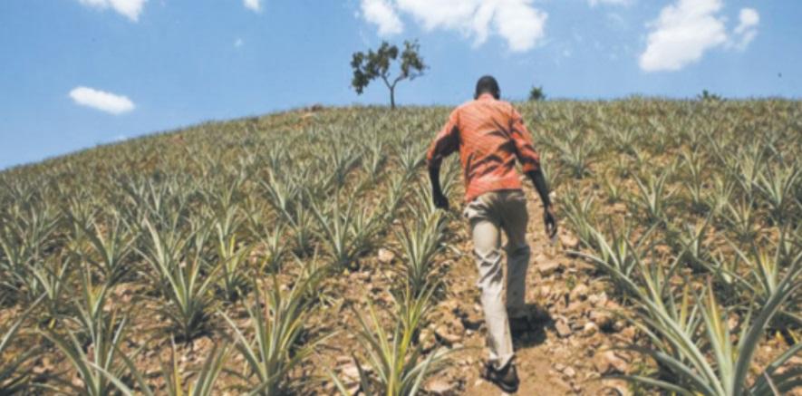 Innovation et technologie agricoles, clés de la réduction de la pauvreté