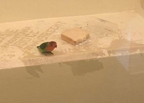 Insolite : Un perroquet mis en cellule