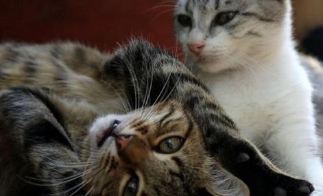 INSOLITE:  Un couple survit grâce à ses chats