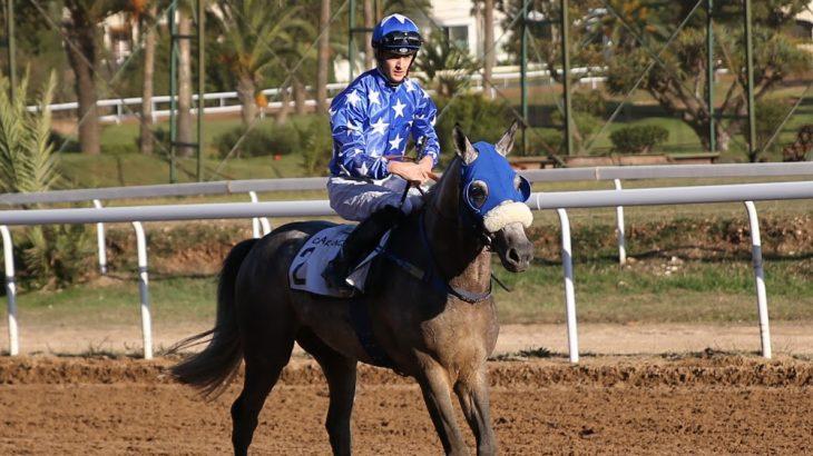 Le cheval Rajeh remporte le GP de S.M le Roi Mohammed VI du pur-sang arabe