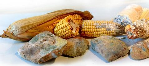 Séminaire national sur les mycotoxines dans les denrées alimentaires