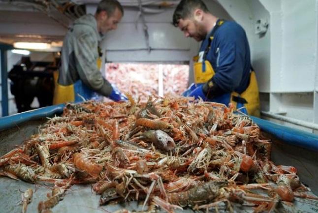 Les pêcheurs britanniques espèrent de meilleures prises grâce au Brexit