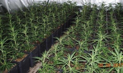 85.000 vieilles condamnations liées au cannabis vont être effacées en Californie