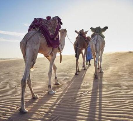 Caravane médicale au profit des éleveurs nomades d'Aousserd