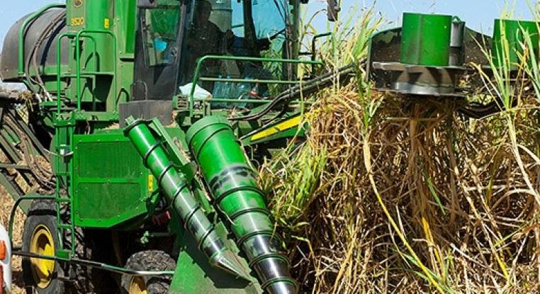 La région du Gharb affiche une bonne production prévisionnelle en canne à sucre